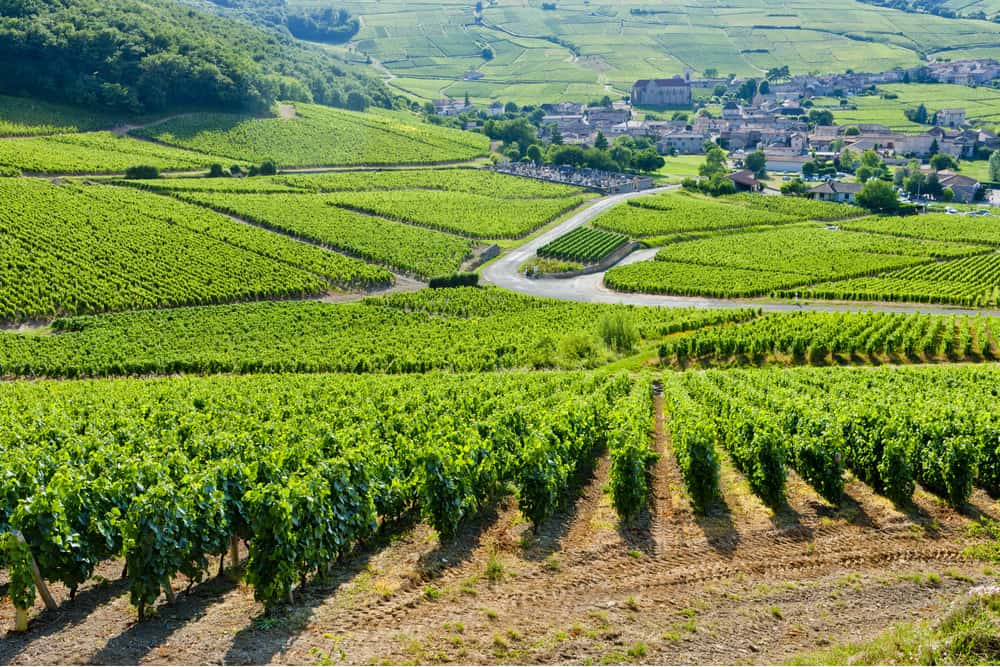 Vineyards in Burgundy France