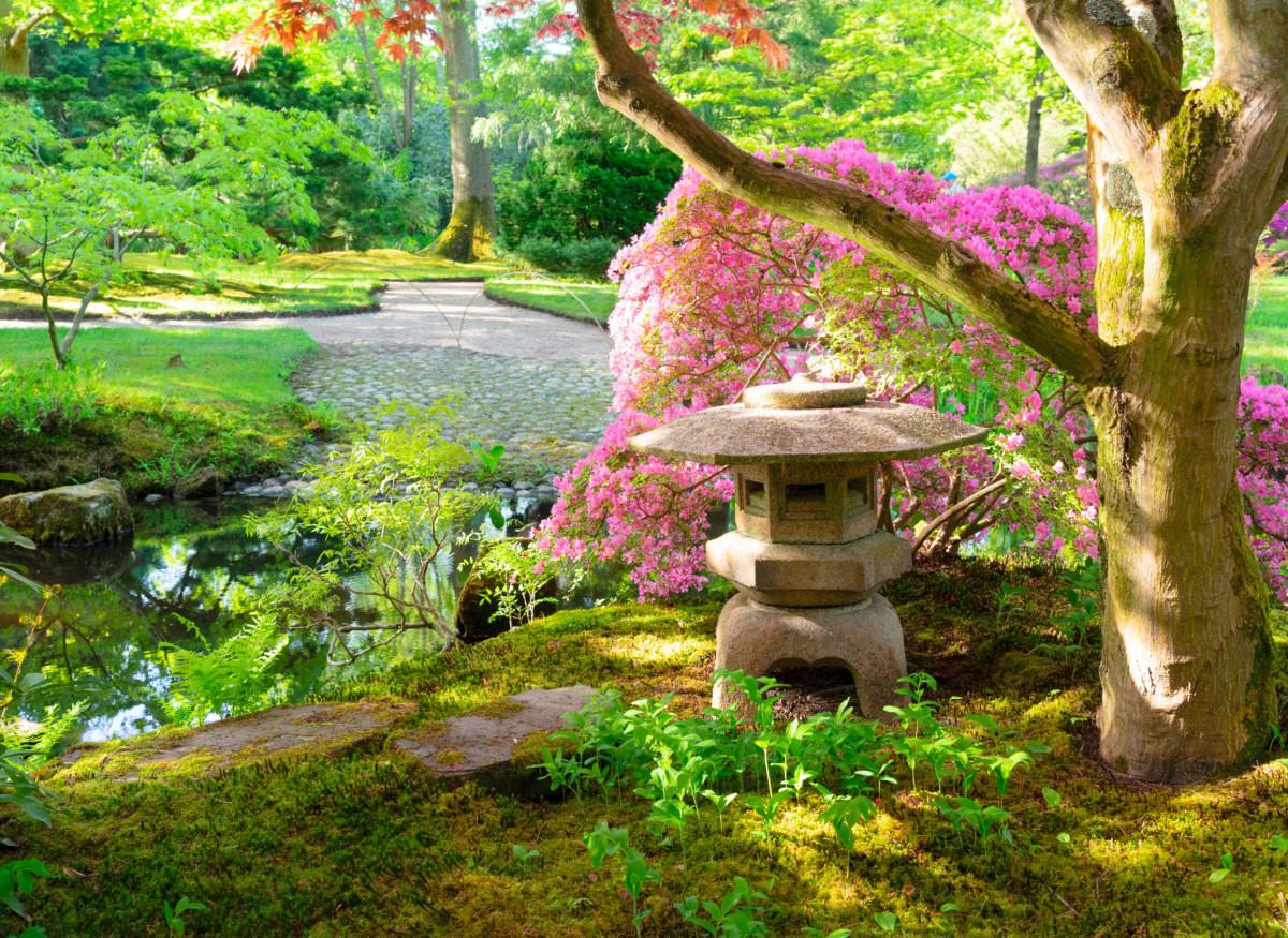 Exploring the Japanese garden The Hague
